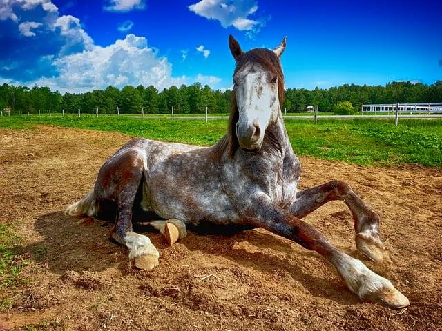 florida DUI on a horse